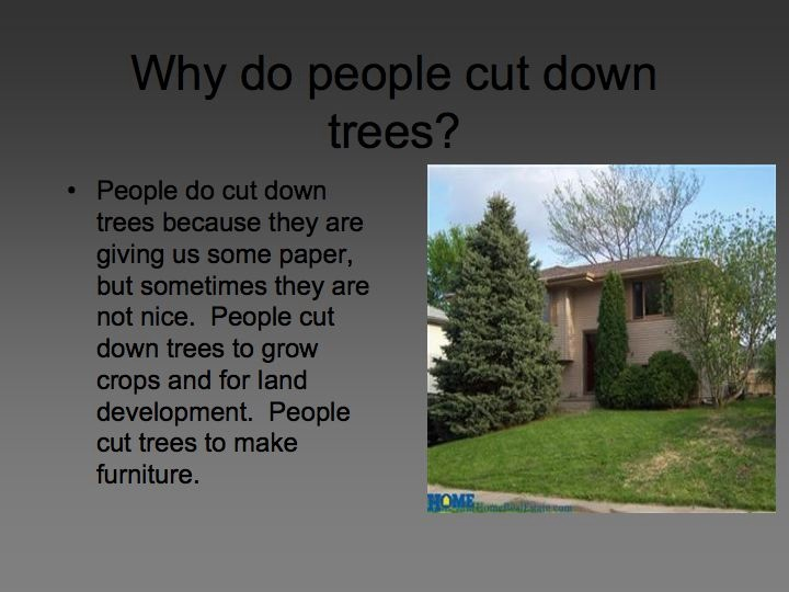 planting trees    why do people cut down trees