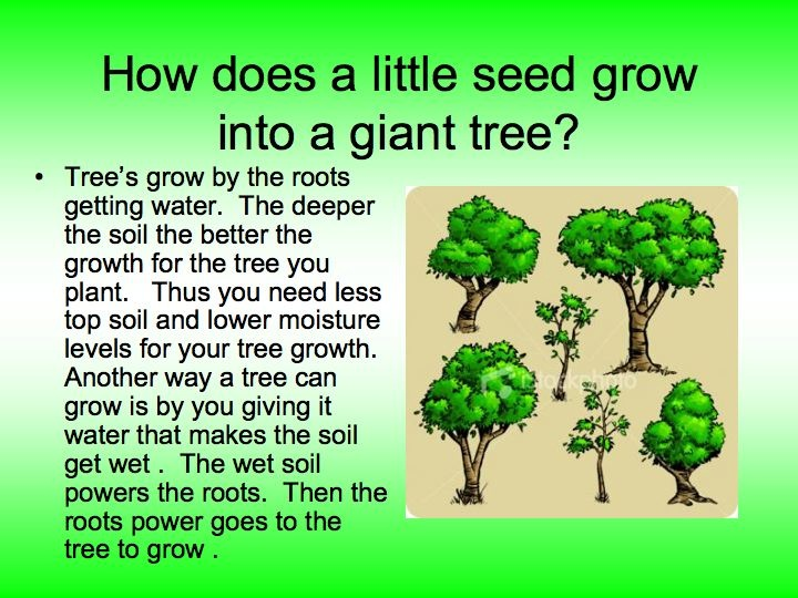 Planting Trees / How do trees grow